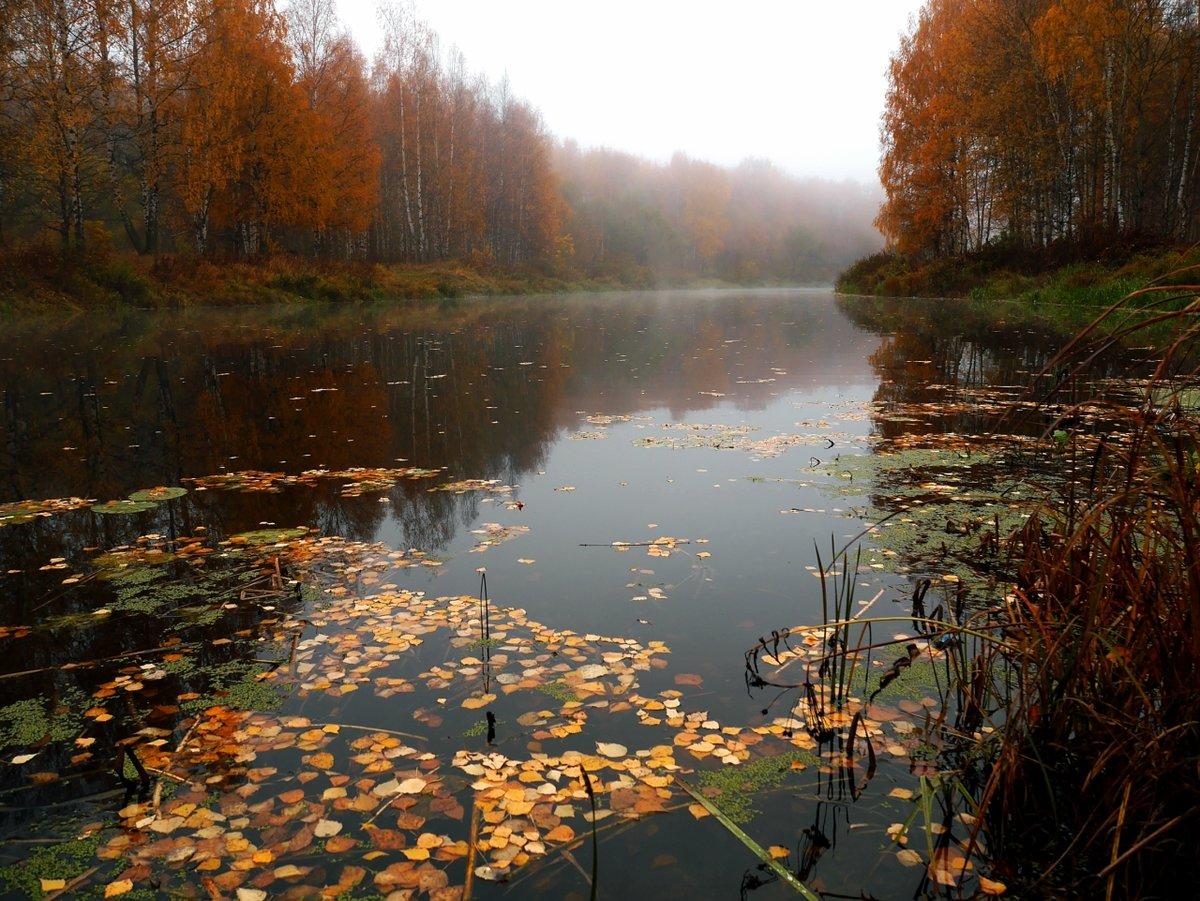 Туман над речкой#березы #деревья #листья #осень #остречина #река #туман