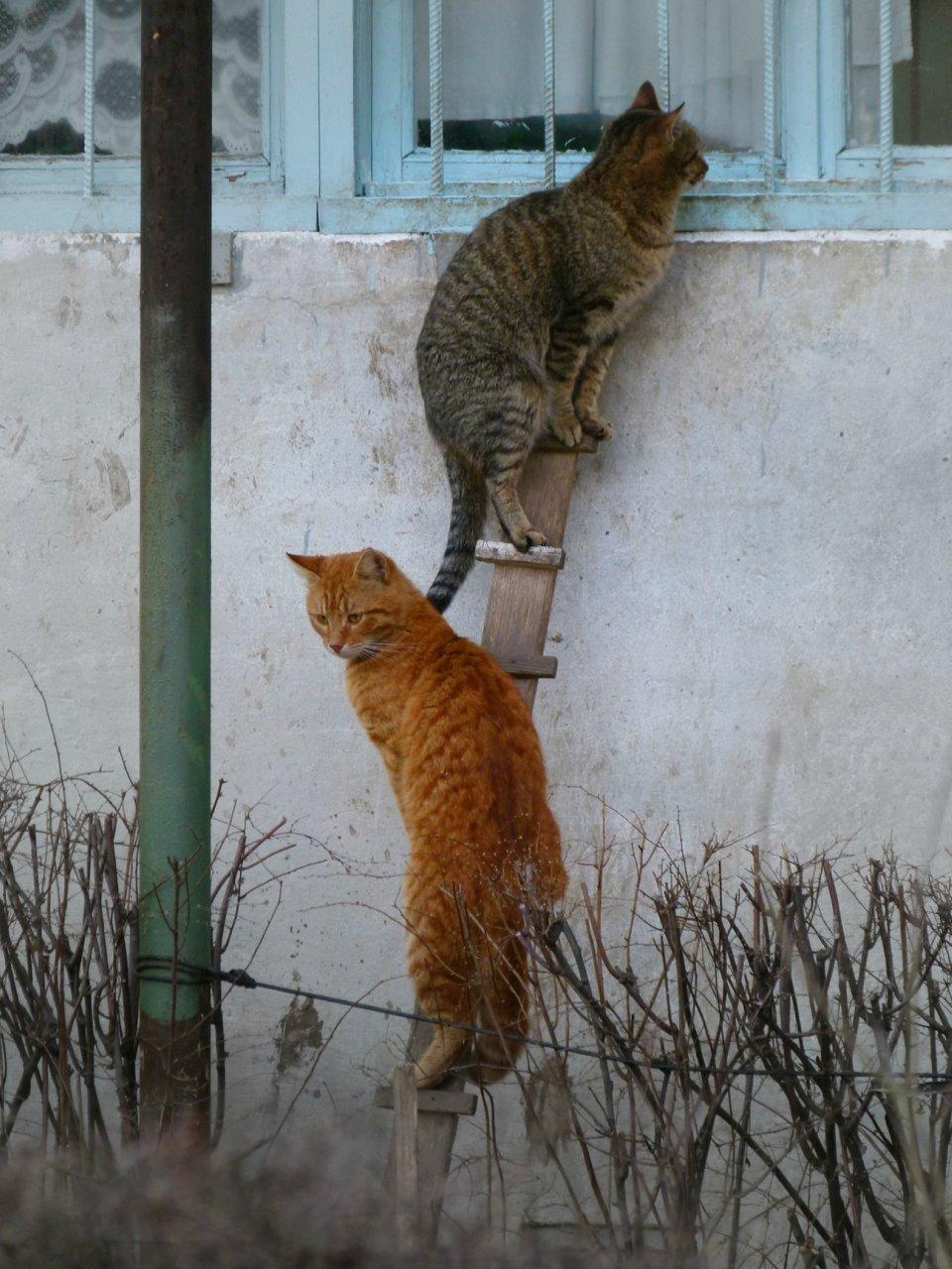 Кот К Весне Похудел. Почему кошка стала худеть, если ест плохо или хорошо, что это может быть: причины потери веса