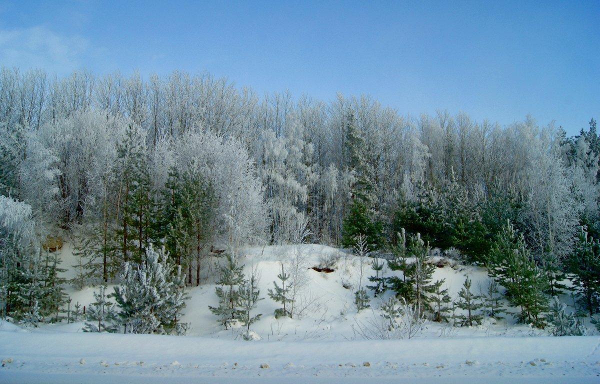 зима природа фото гифки