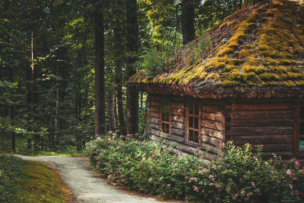 Картинки домиков в лесу деревни