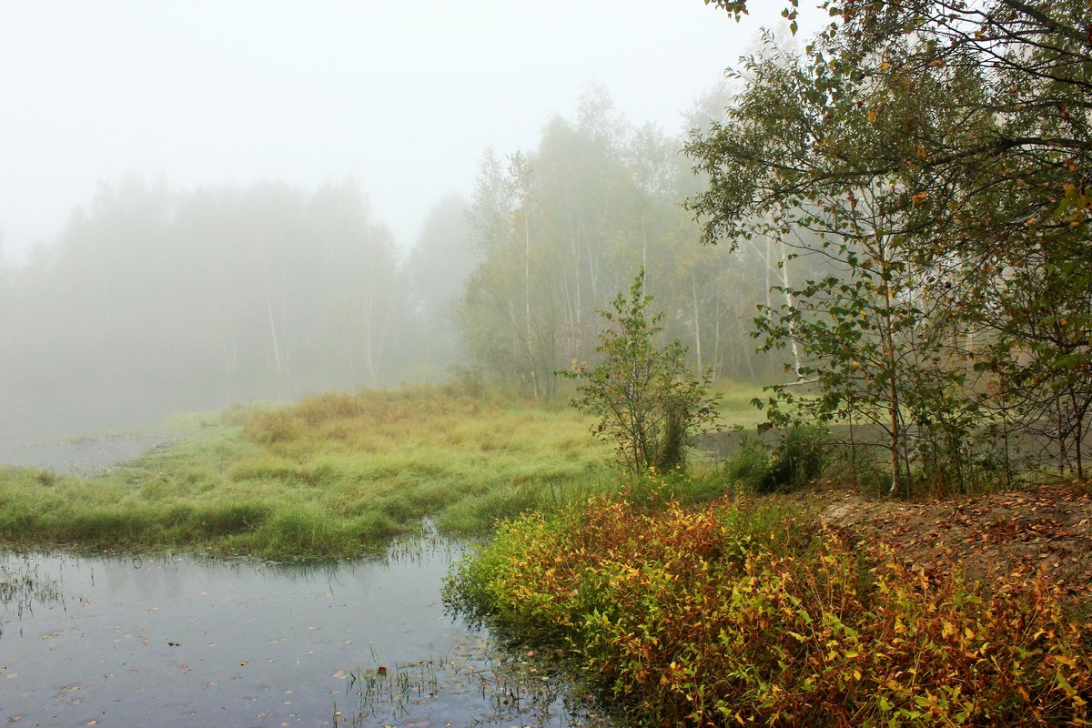 Осенние туманы#осень #пейзаж #природа #сентябрь #туман #утро #Ñабаровск
