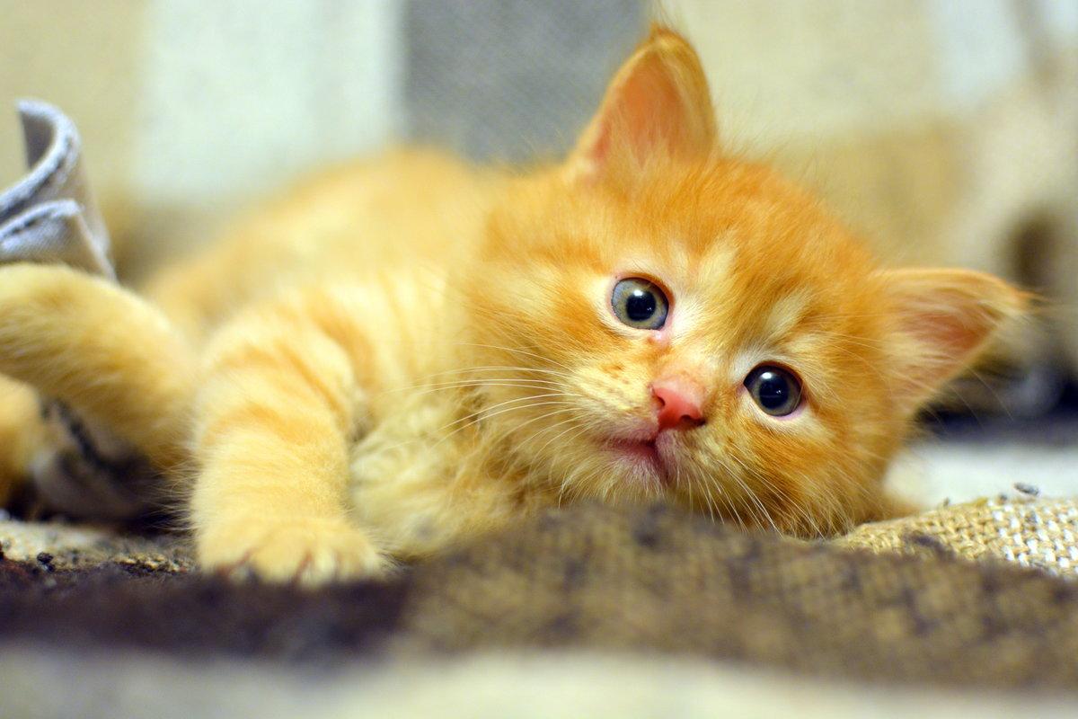 Картинки рыжие котята, открытки корел