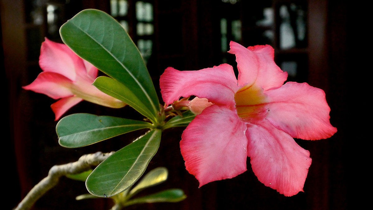 моё всё, растительность вьетнама фото удалось сделать редкие