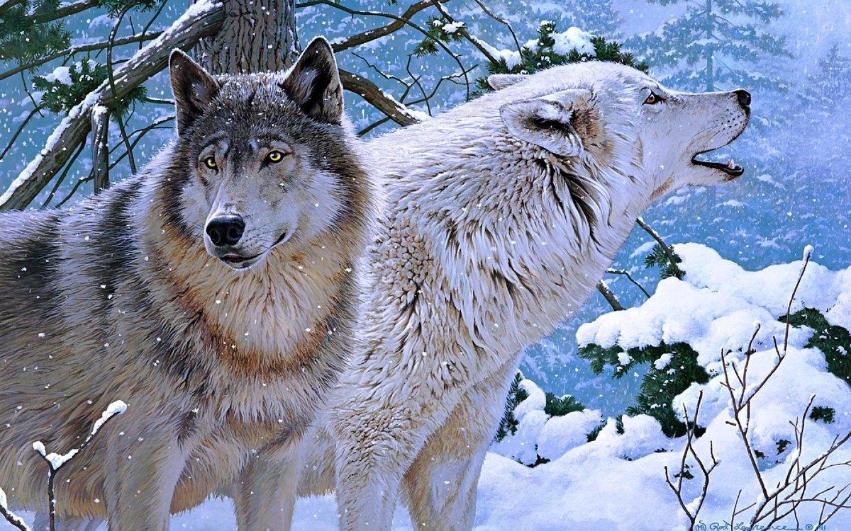 Своими, открытка животные волки