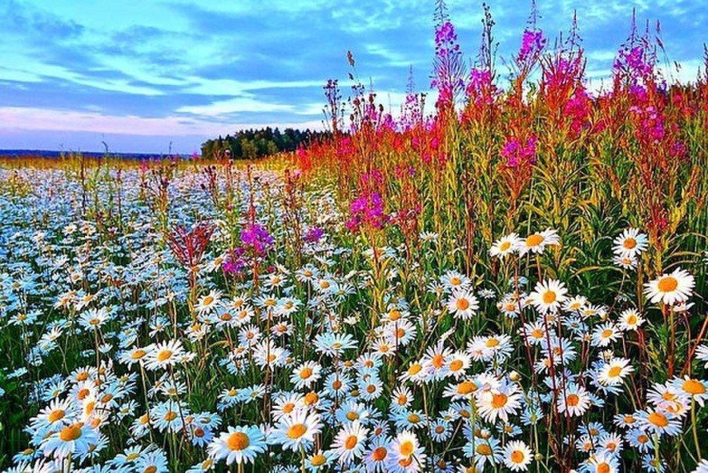 полевые цветы в июле стихи картинки названия немногих