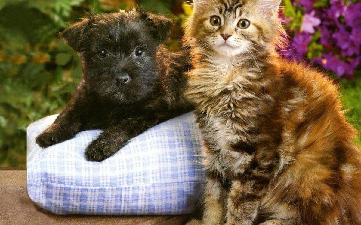 это фото щенок и котенок делали