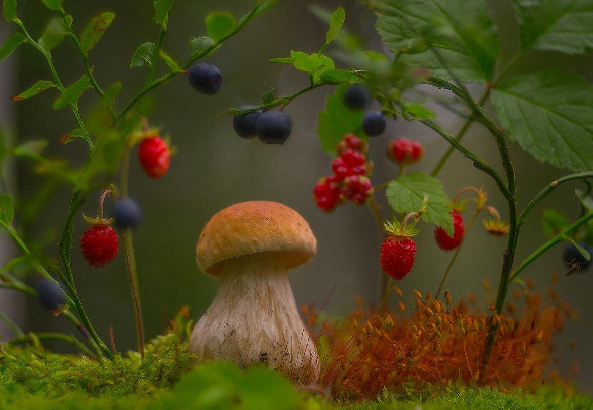 Картинки ягоды грибы