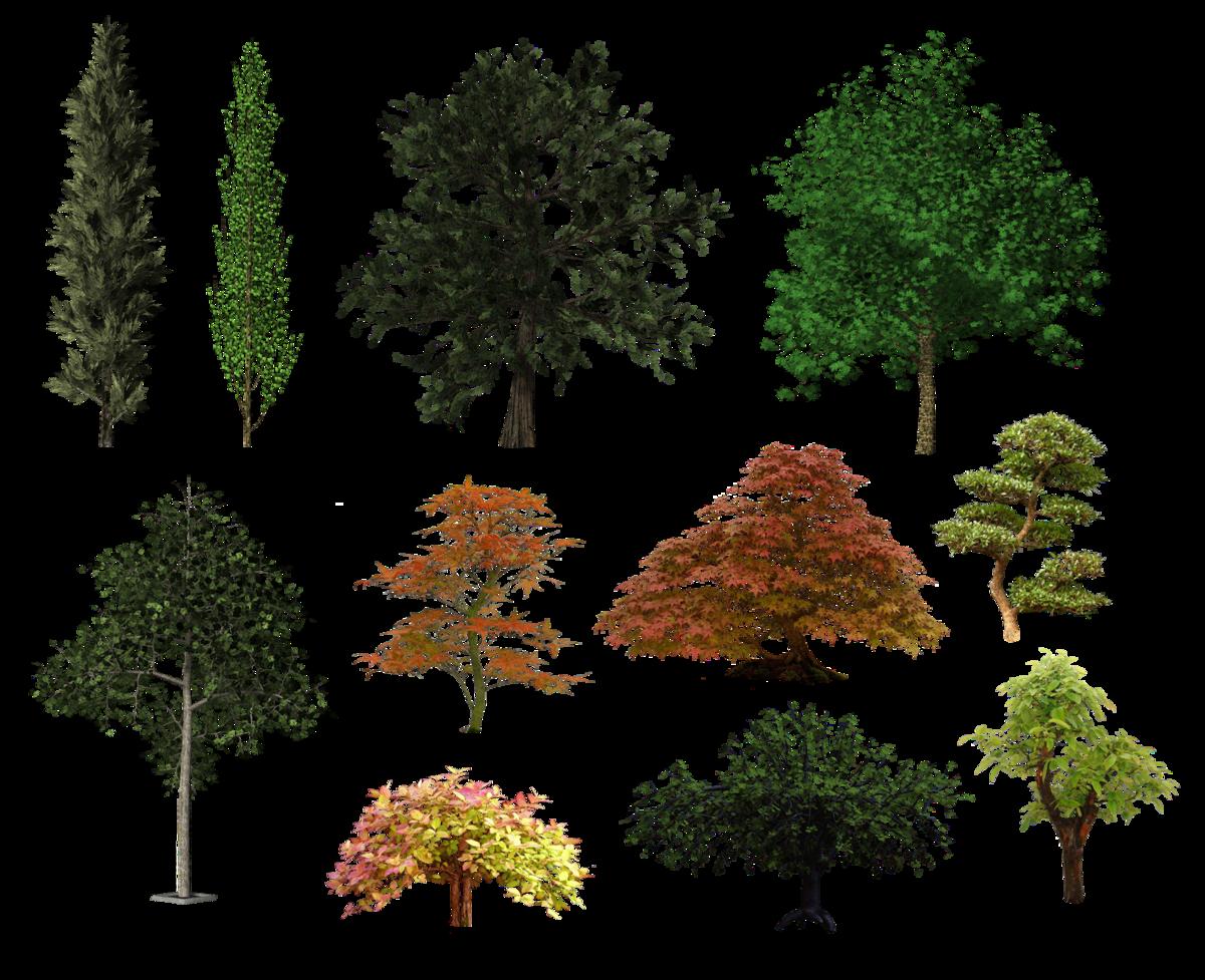 картинки все деревья бани
