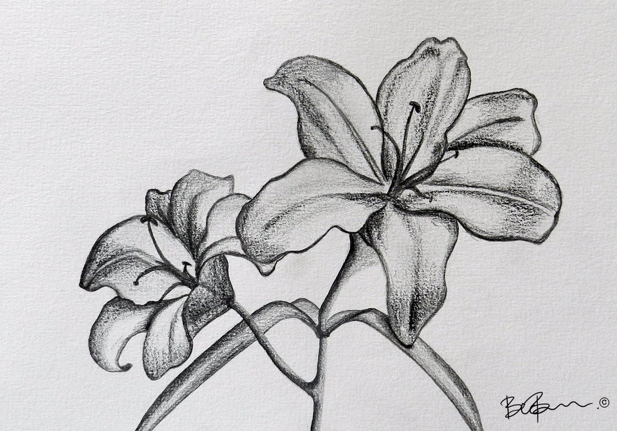 Картинки красивых цветов для срисовки
