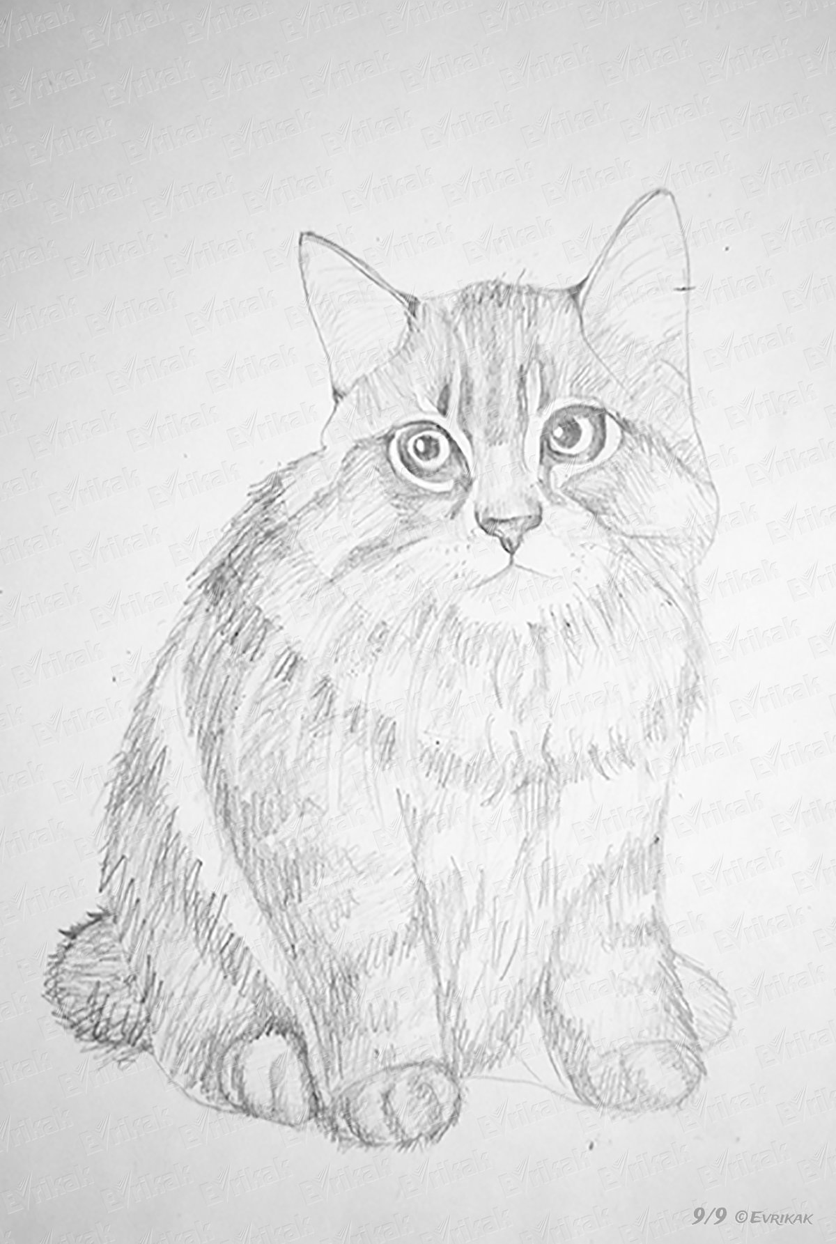 нарисованы карандашом котики картинки увидел этот