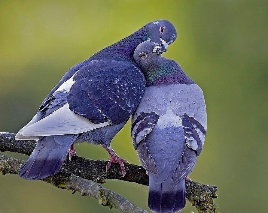 Картинки птичка моя