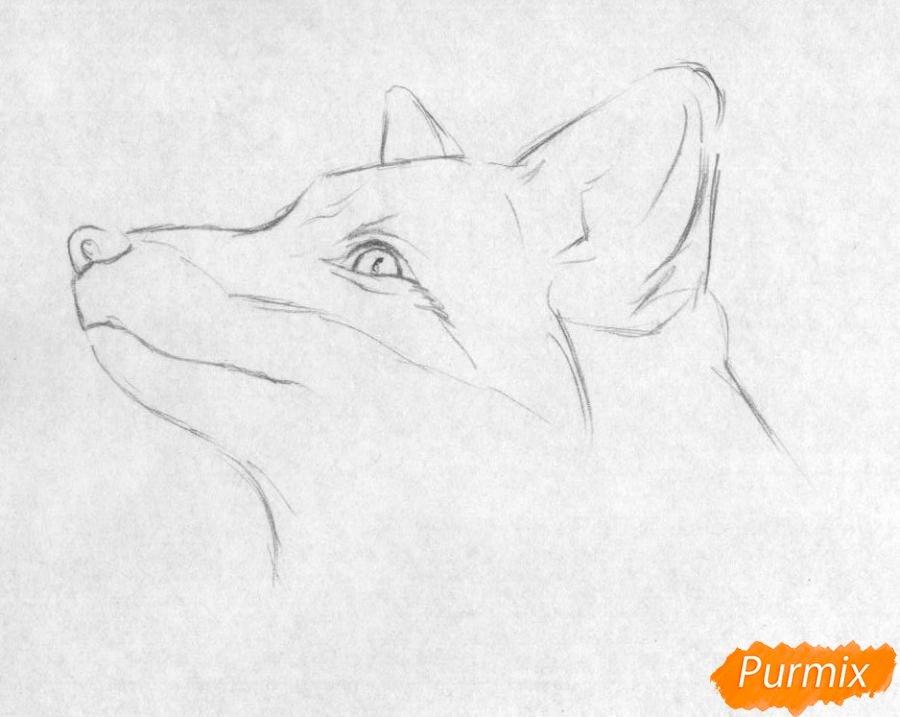 красивые рисунки простым карандашом животные для начинающих один немногих пляжей