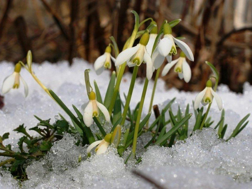 она весенний снег картинки радостью делюсь