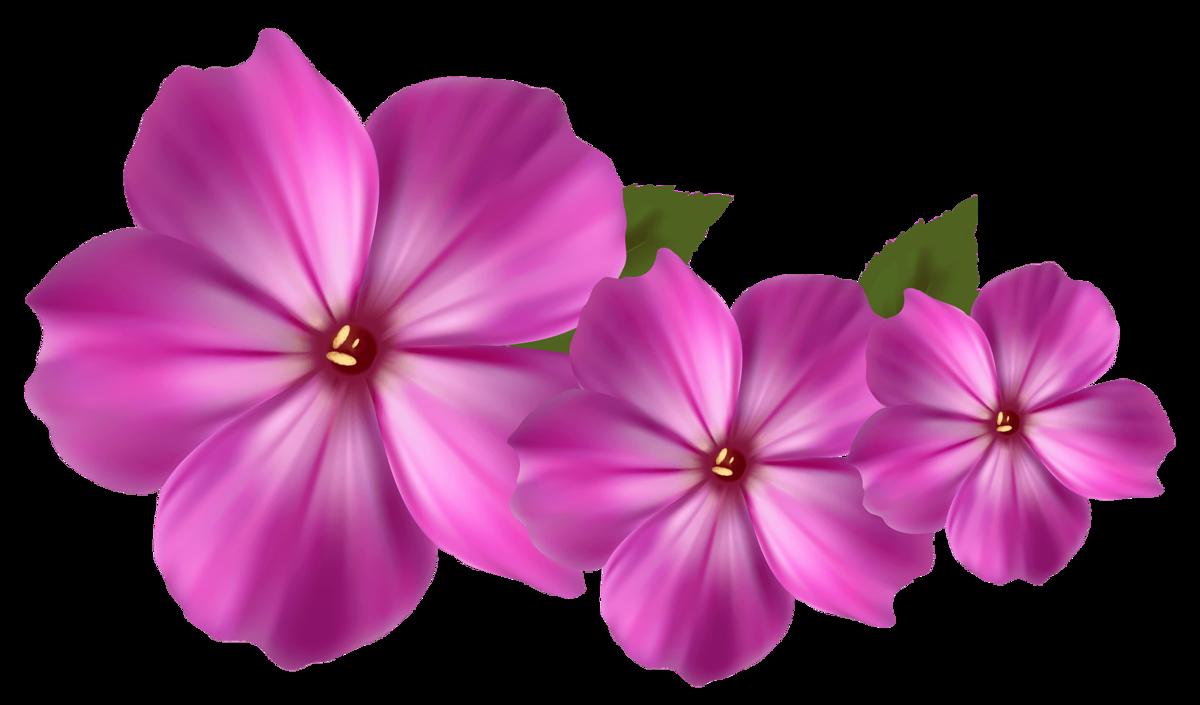 Любимой, маленькие картинки цветов на белом фоне