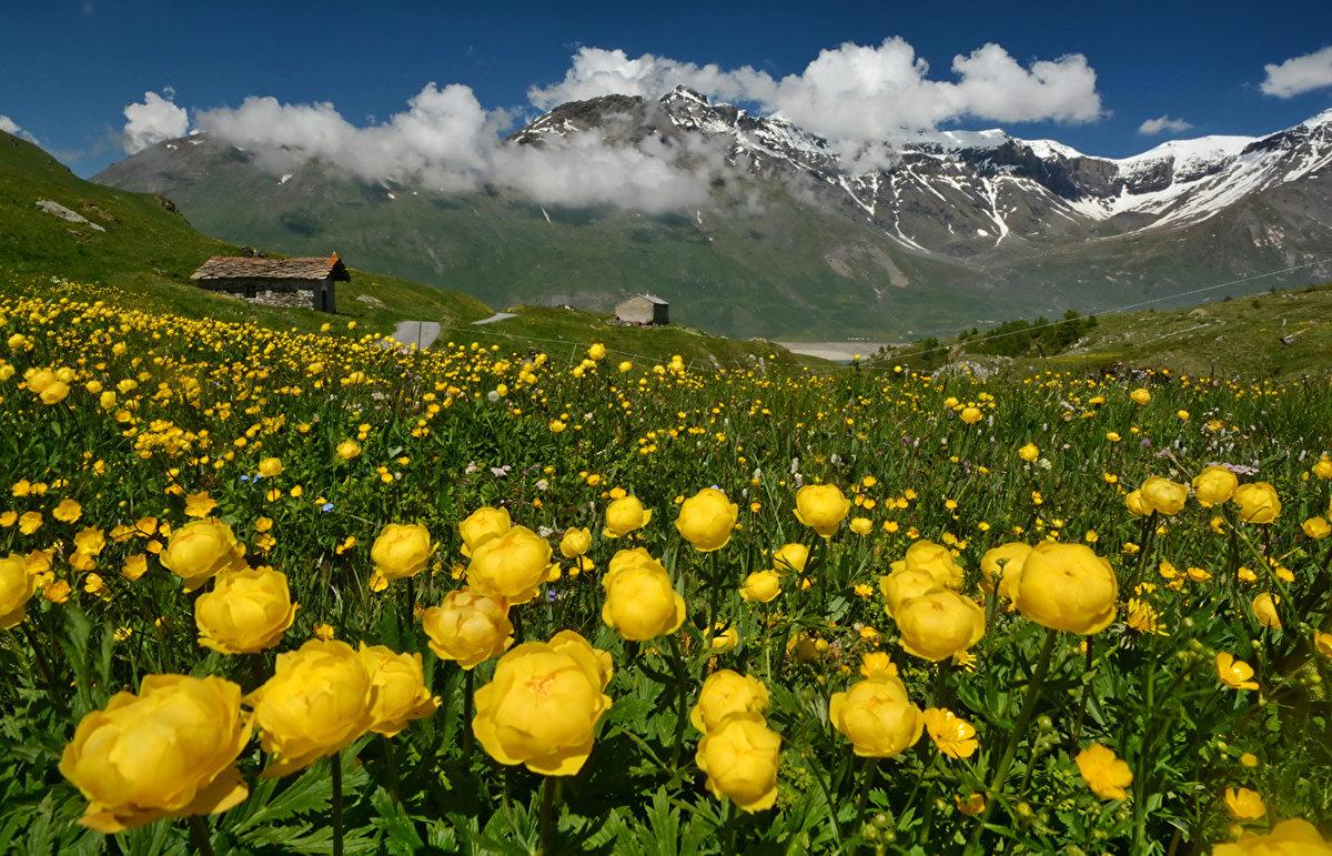 это фото роза в горах правило, это очень