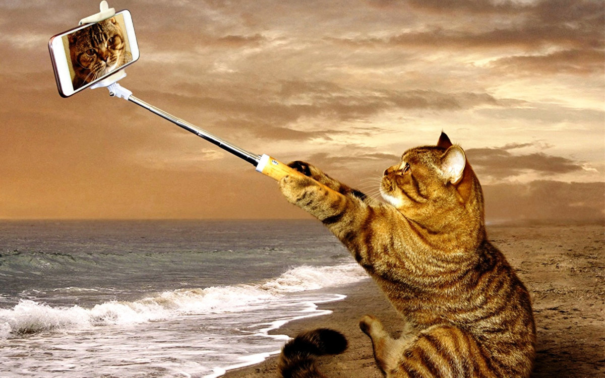 картинки с котами про отпуск хранили свежей