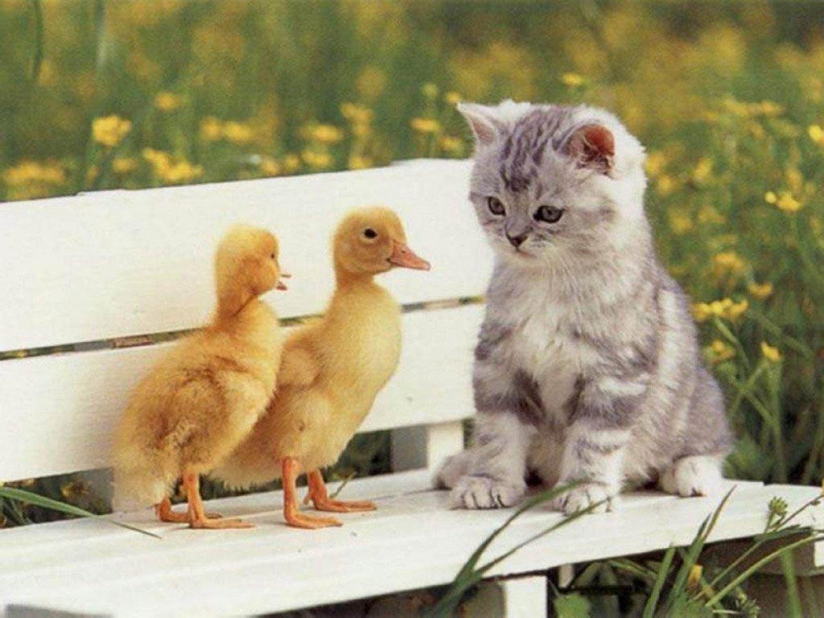 Надписью для, смешные картинки с животными с надписями