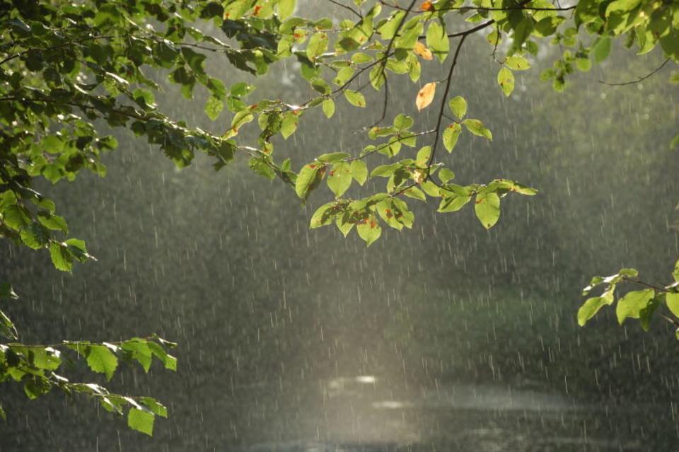 Август дождливый