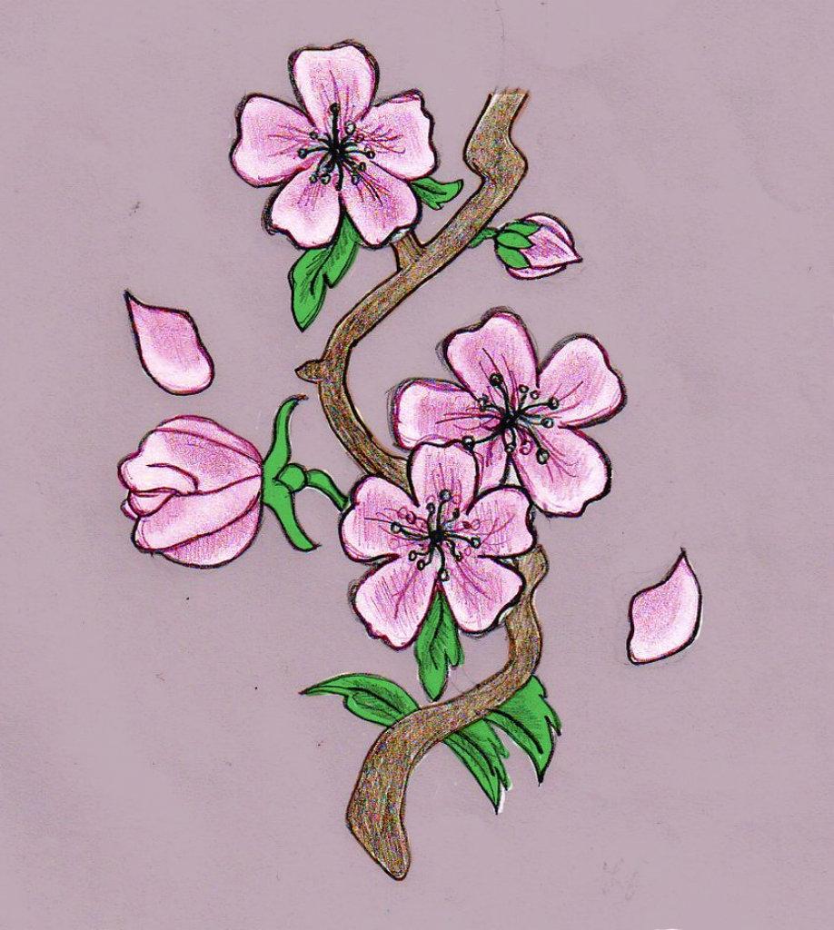 Цветы сакуры нарисованные картинки