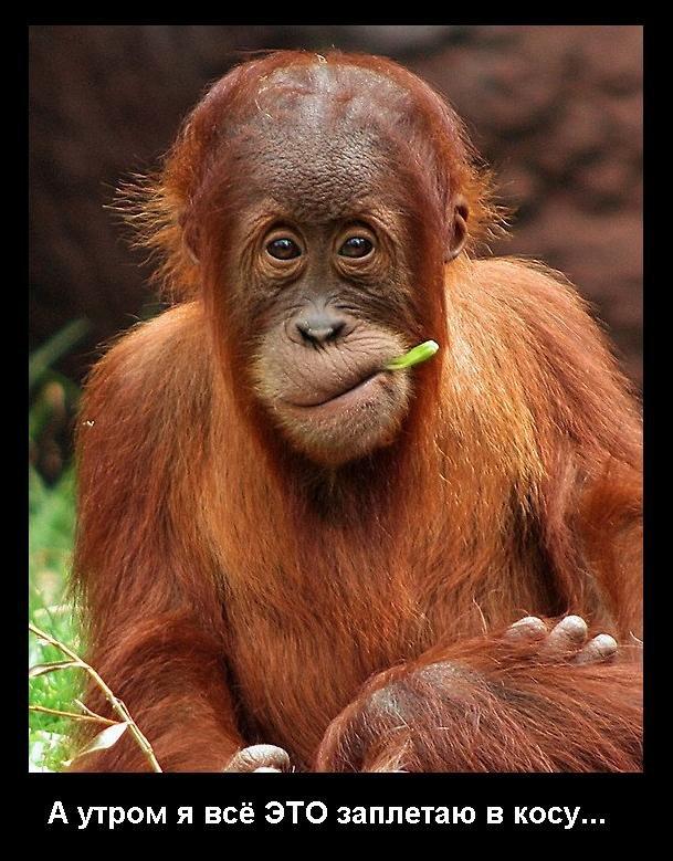 Юбилеем, картинки шимпанзе прикольные