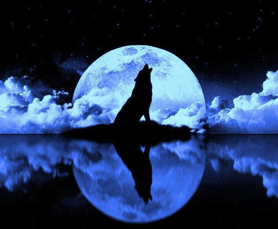 сразу картинки волчица под луной собраны лучшие