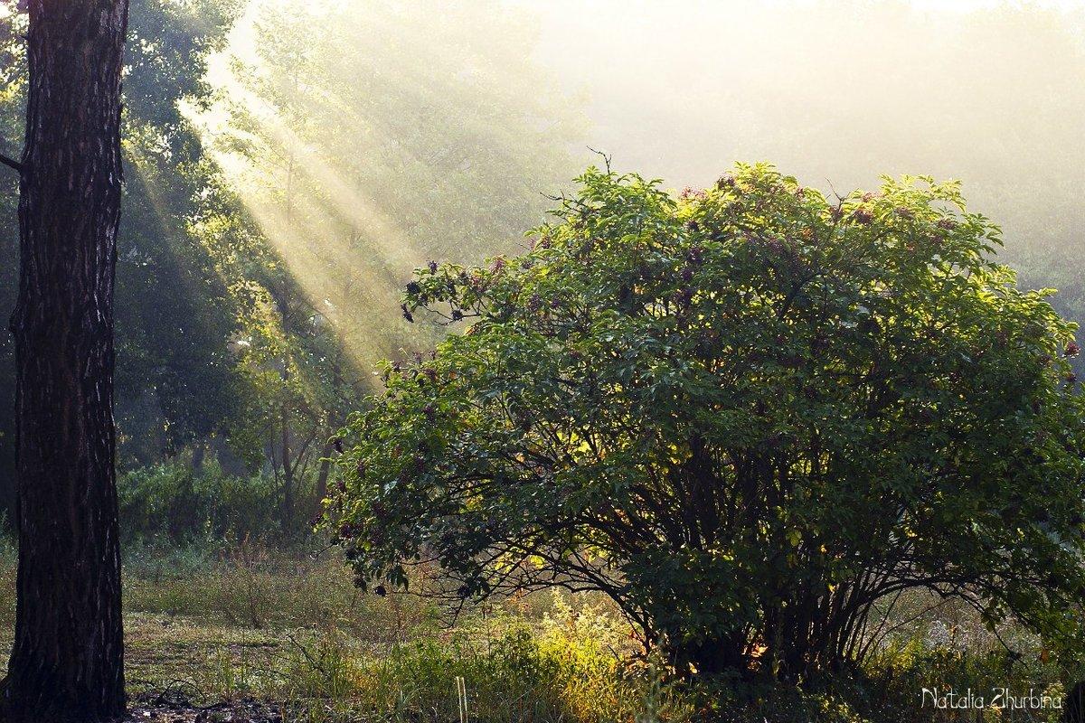Фото растительности крыма амстафф