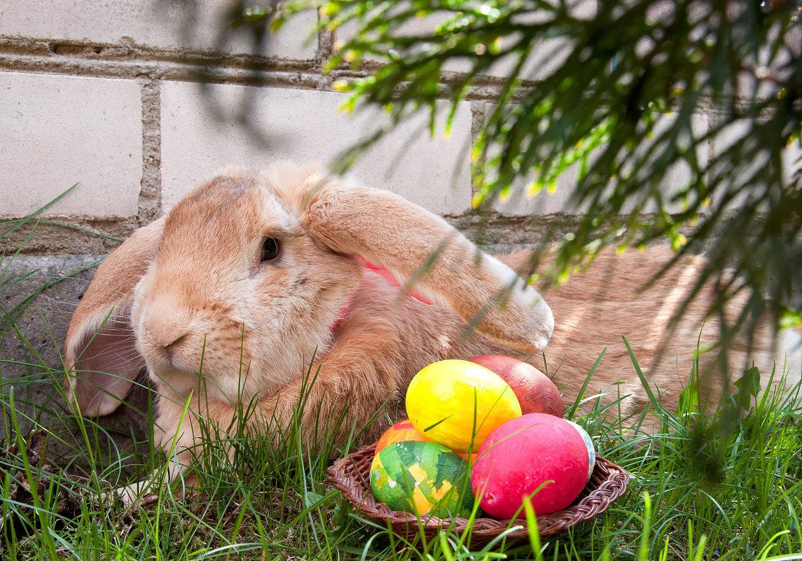 Кролики пасхальные картинки