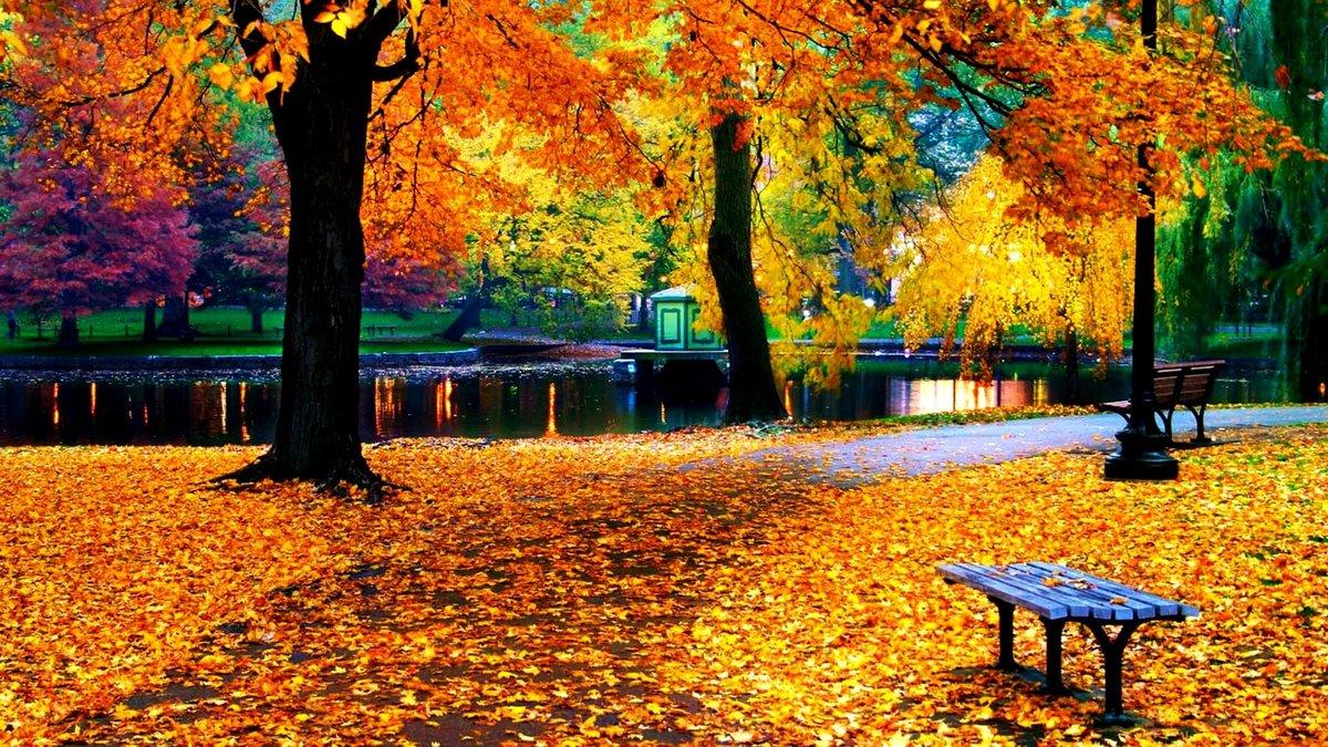 Осенний парк картинки анимация, днем рождения