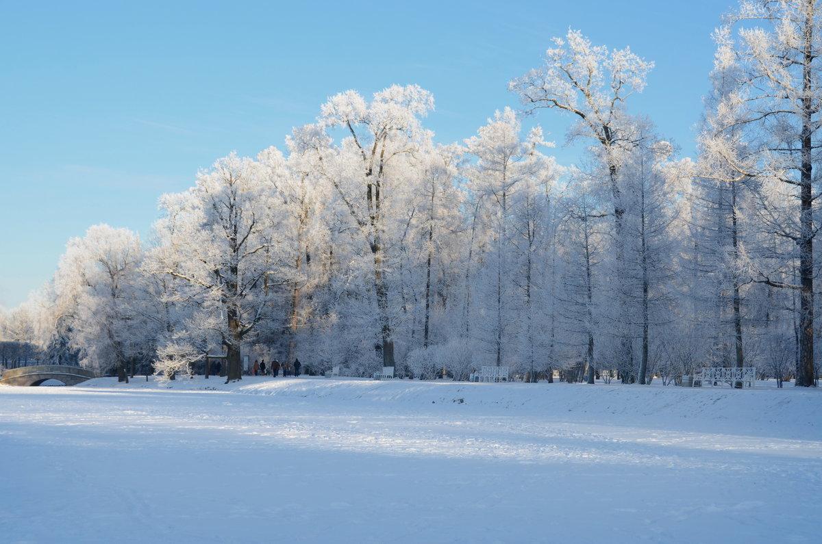 картинки зимний парк комментах про дроп