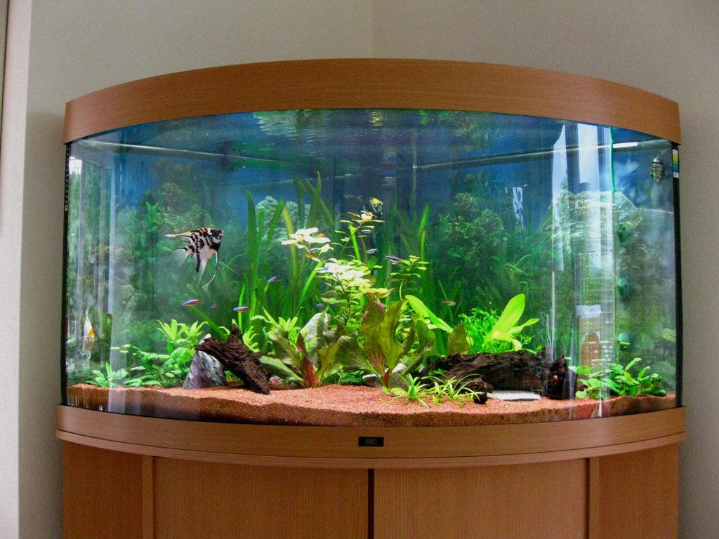 Домашний аквариум фото стоит путать