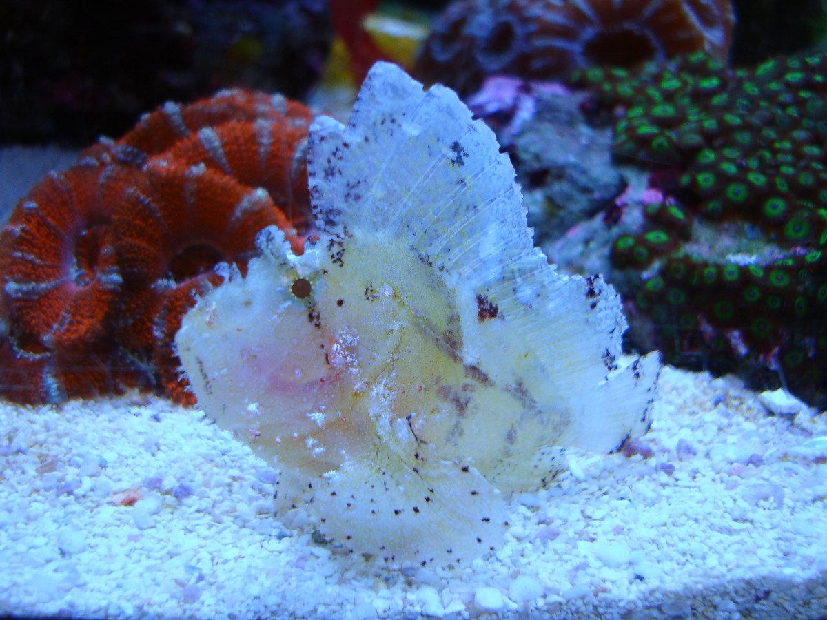 хоть знатный морские грибы фото с названиями остановиться одноимённом