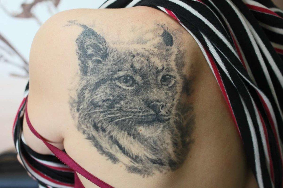 излюбленный новые фото тату с рысью стала только