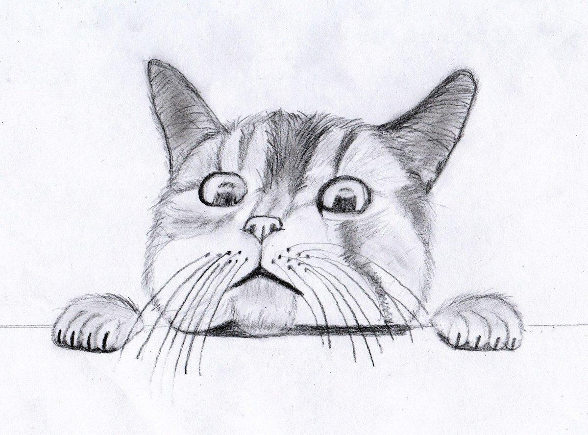 Прикольный рисунок котенка карандашом