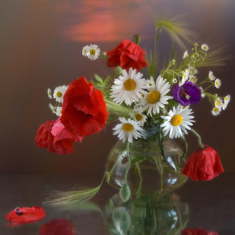 Цветы полевые анимации картинки