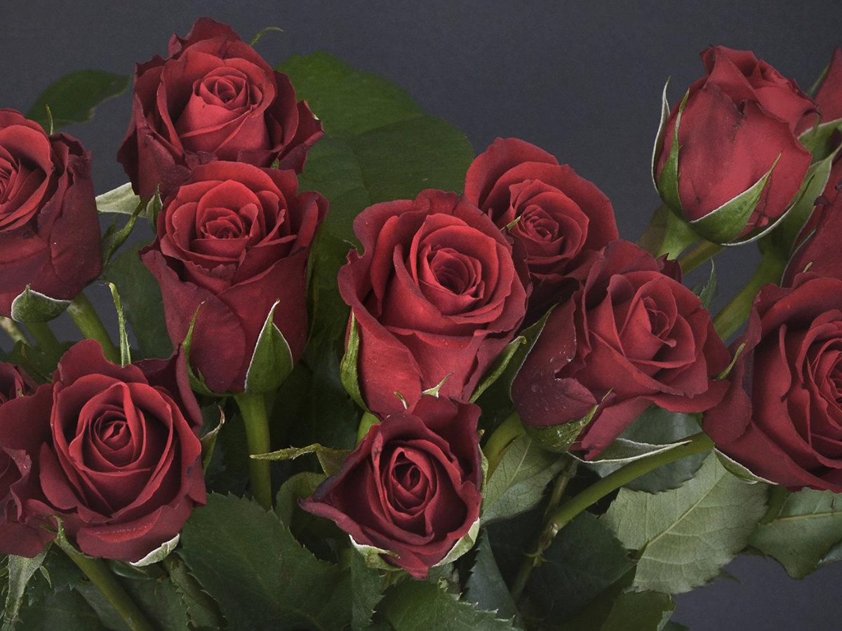 Открытки розы темно красные