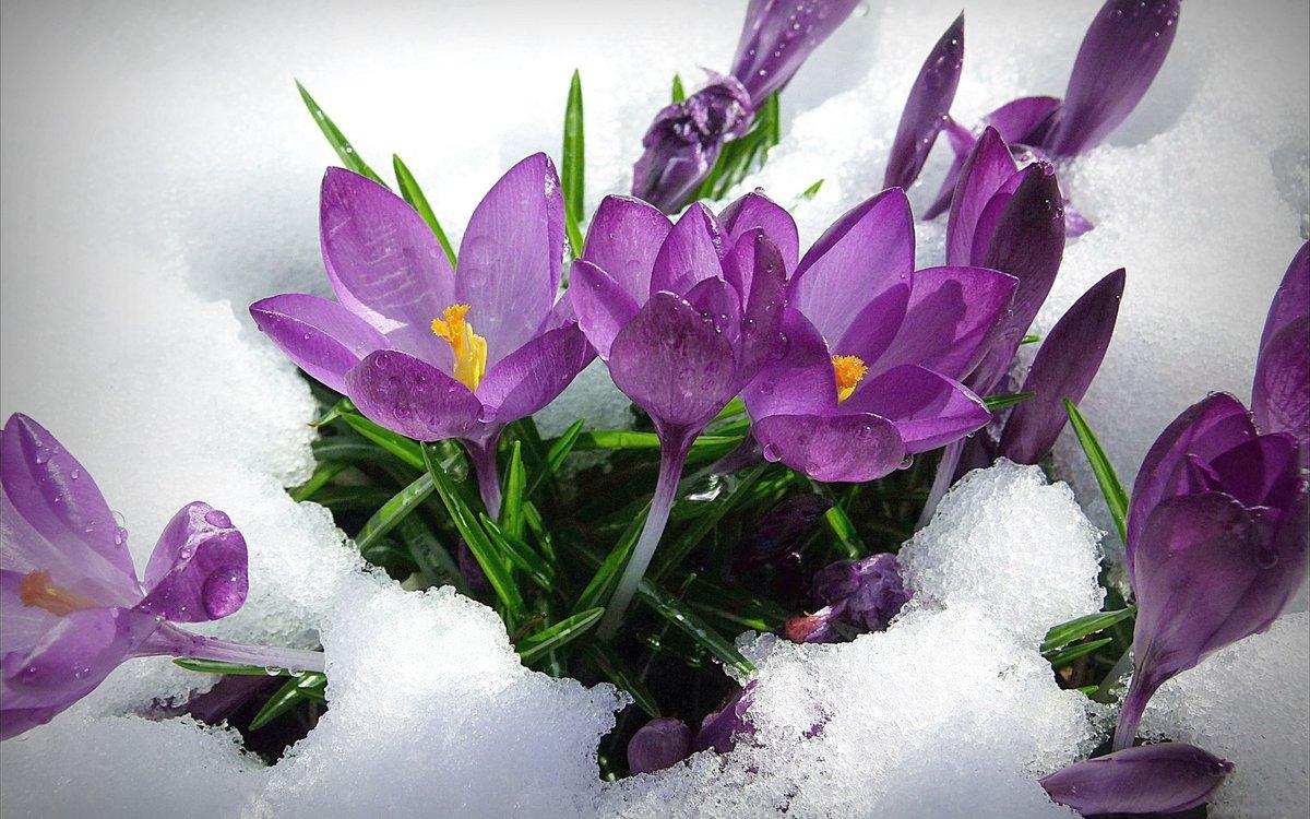 Весенние цветы открытках, картинки