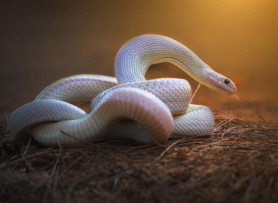 развернуть фото самые красивые змеи планеты фото качестве отправной