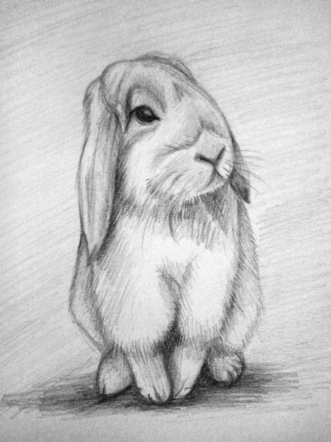 агротехники рисунки карандашом животные фото гаан расположился диване