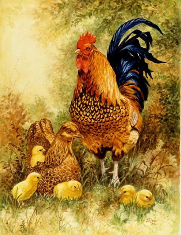 Картинки курица с цыплятами и петухом для детей, дороги приколы