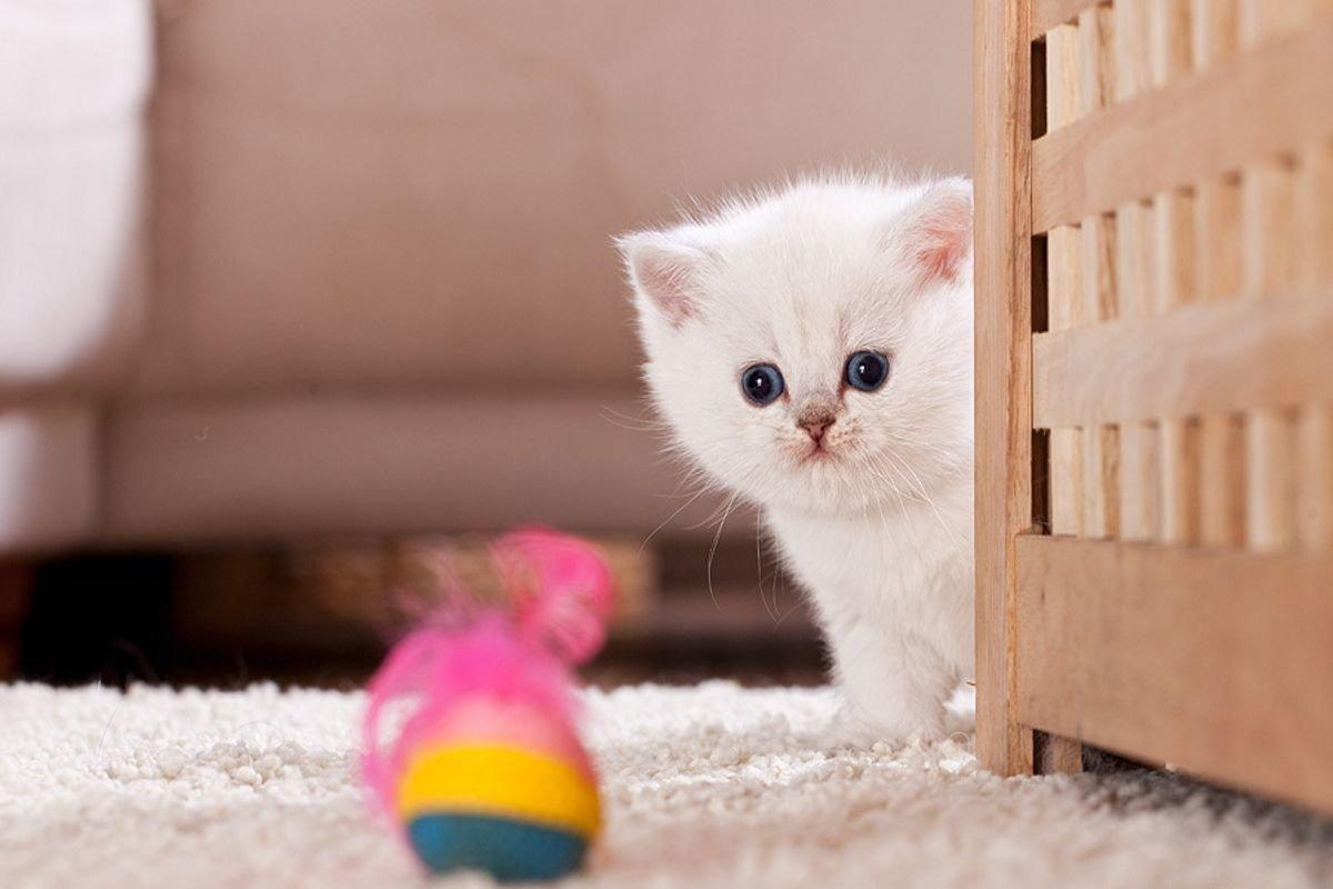 картинка самого милого котика поможет создать неформальный