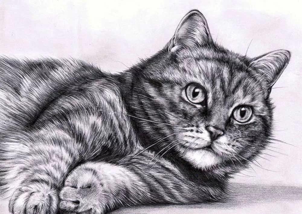 Рисунок животные карандашом, днем рождения