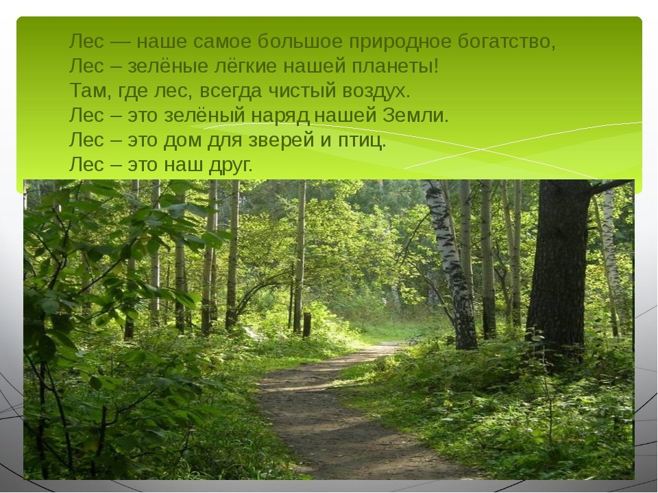 Рассказ о лесе с картинками
