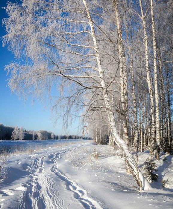 Самые красивые картинки про зиму узнать
