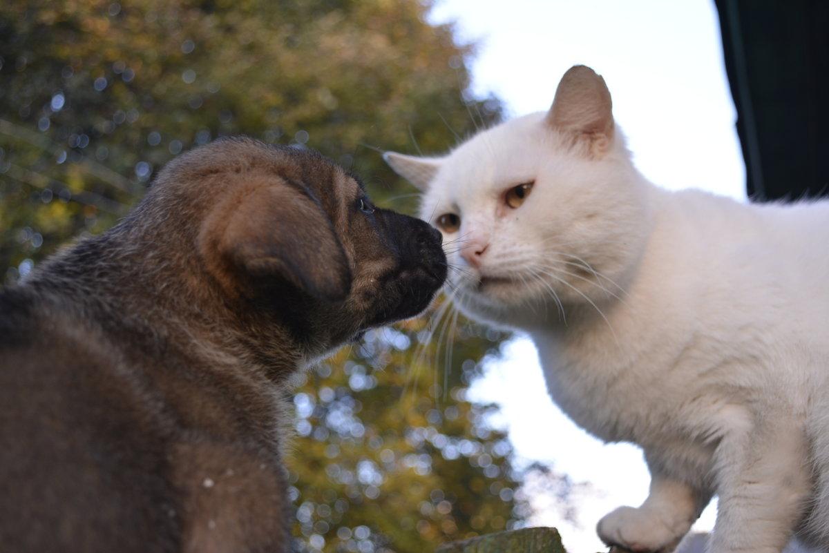 кот знакомства