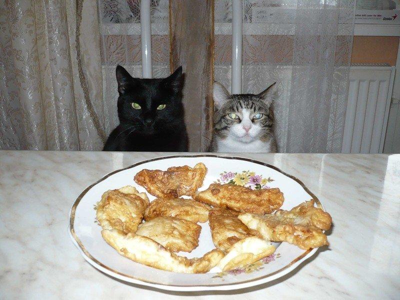 Вкусно, наверное?#еда #кошки #рыба