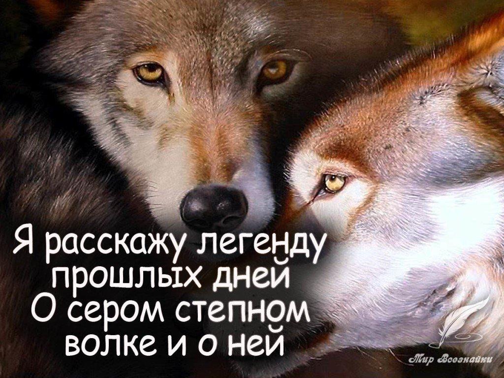 Картинки с надписями про волчицу, прикольные картинки