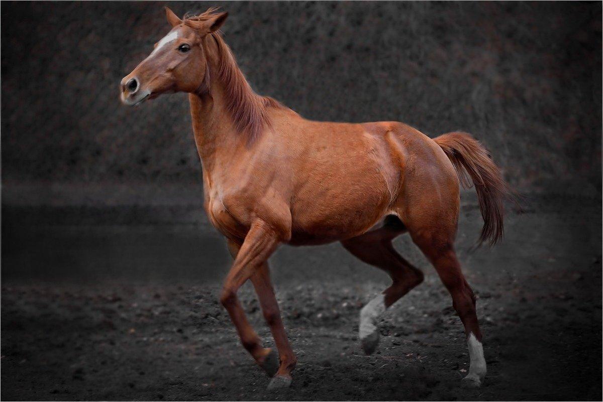 бегать как лошадь картинки люблю