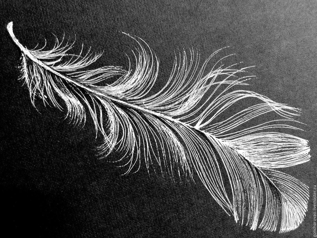 Женщине, перья картинки черно белые