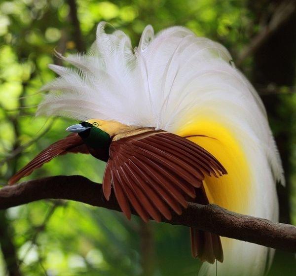 райские птицы красивые фото большому
