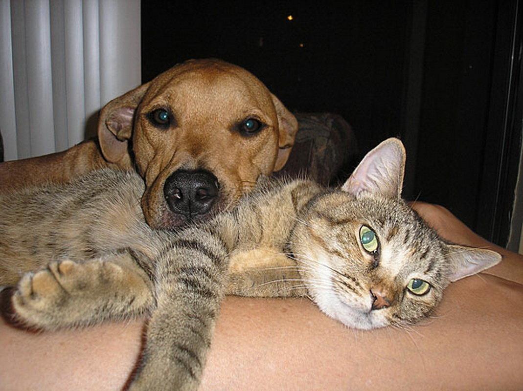 Днем, прикольные коты и собаки картинки